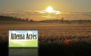 Attema Acres, St. Ann's